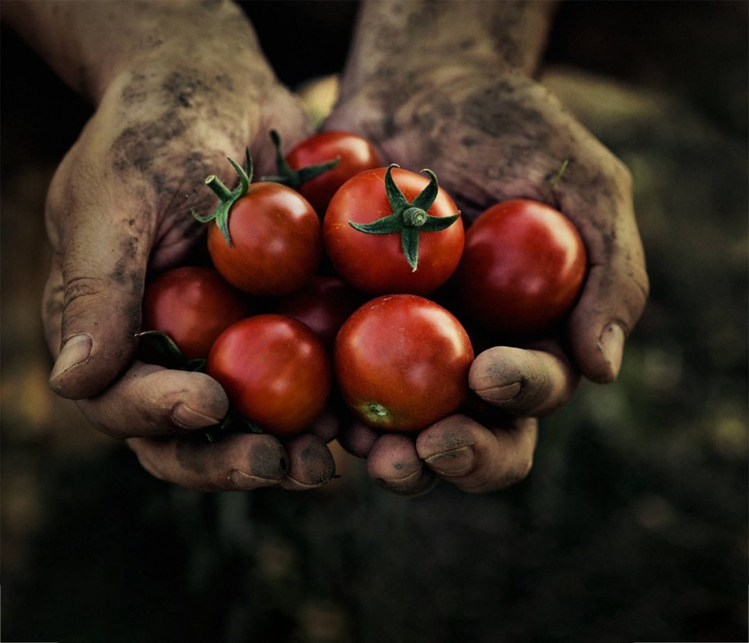 Food-and-Modern-Slavery-What-is-behind-your-food