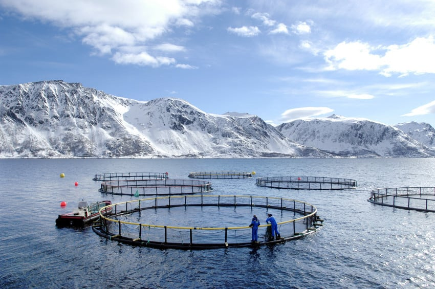 Creating a dialogue with the aquaculture industry on responsible sourcing
