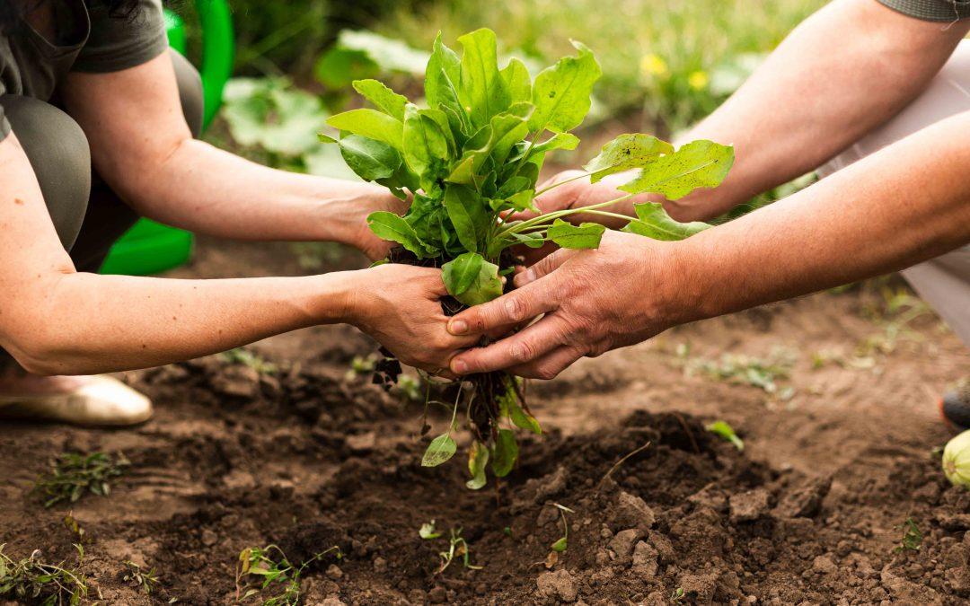 Benchmarking SAI Platform's Farm Sustainability Assessment