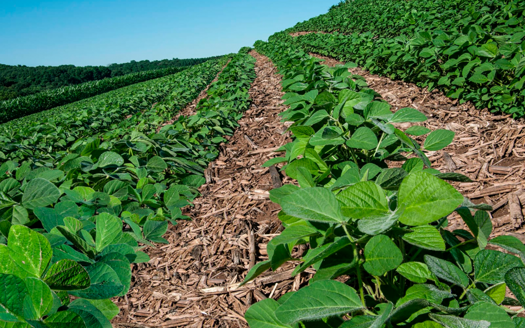 The importance of soy in crop rotation