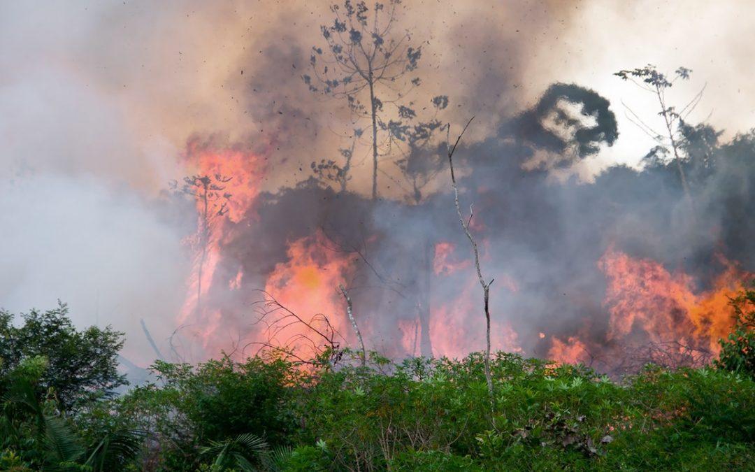 Deforestation and Forest Fires