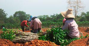 Southeast Asia Organic Proterra member