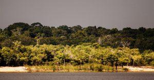 Amazon rainforest is again under threat